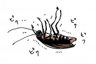 ゴキブリ退治の方法かんたん子供でも床を汚さず駆除と対策