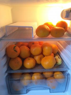 みかん保存方法冷蔵庫